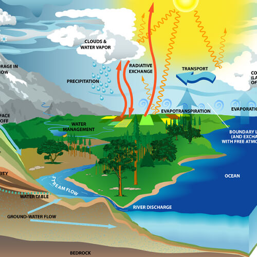 What is Energy Flow in an Ecosystem?