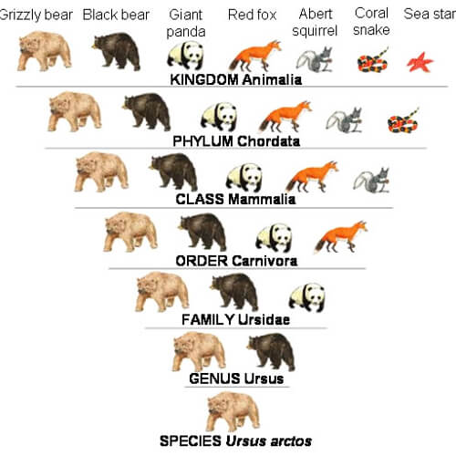 How are Animals Sorted into Different Groups?